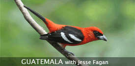 Guatemala with FIELD GUIDES BIRDING TOURS