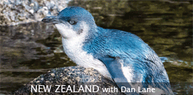 Field Guides Birding Tour to NEW ZEALAND