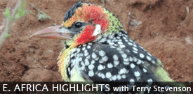 East Africa Highlights: Kenya & Tanzania birding tour with FIELD GUIDES