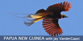 Papua New Guinea birding tour with FIELD GUIDES