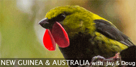Field Guides Birding Tour to NEW GUINEA & AUSTRALIA