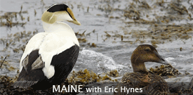 Maine birding tour with FIELD GUIDES