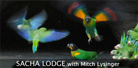 Ecuador's Sacha Lodge with FIELD GUIDES BIRDING TOURS