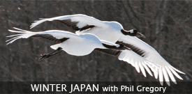 Japan in Winter birding tour with FIELD GUIDES