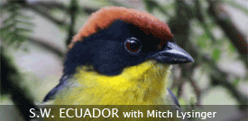 SW Ecuador birding tour with FIELD GUIDES
