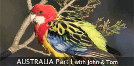 Australia Part One birding tour with FIELD GUIDES