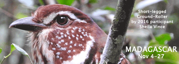 Madagascar with FIELD GUIDES BIRDING TOURS