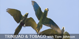 Trinidad and Tobago with FIELD GUIDES BIRDING TOURS