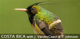 Costa Rica birding tour with FIELD GUIDES
