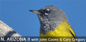 Arizona birding tour with FIELD GUIDES