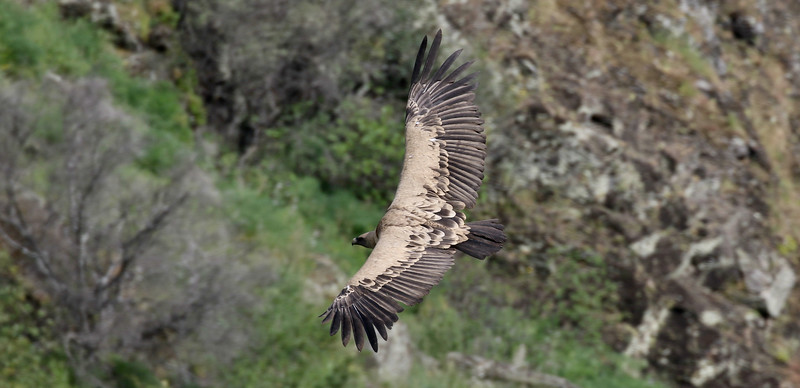 Portugal Birds & Wine with FIELD GUIDES BIRDING TOURS