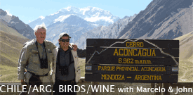 Chile and Argentina Birds and Wine with FIELD GUIDES BIRDING TOURS