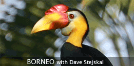 Borneo birding tour with FIELD GUIDES