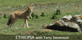 Ethiopia birding tour with FIELD GUIDES