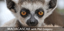 Field Guides Birding Tour to MADAGASCAR