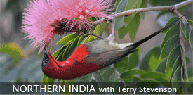 Northern India with FIELD GUIDES BIRDING TOURS