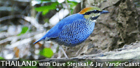Thailand with FIELD GUIDES BIRDING TOURS