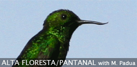 Brazil birding tour with FIELD GUIDES