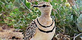 Namibia & Botswana with FIELD GUIDES BIRDING TOURS