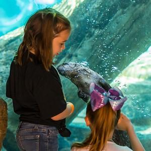 Akron Zoo  052419