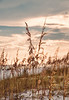 Sea Oats, Sunset, Henderson Beach State Park, Destin, FL
