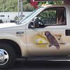 St. Thomas taxi - birds!