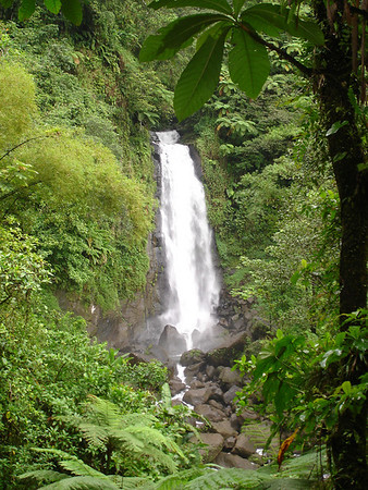 Day 5 - Dominica