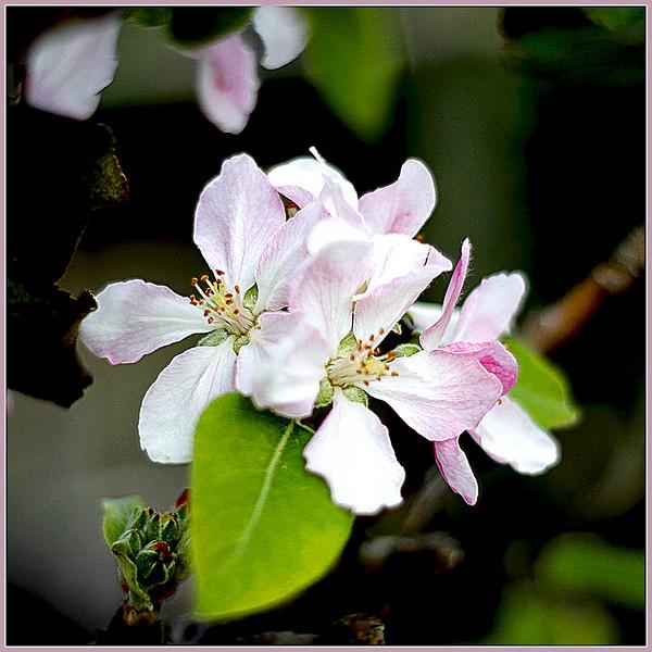 Lynnae_Spring