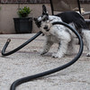 Attack of the Garden Hose (1 of 1)