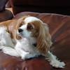 GaffneyO_Pet Photo MAX