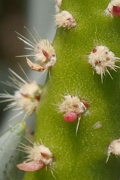 FeldL_Cactus