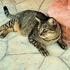 Esther Spektor - My friend's cat  4232746286_3b596aaaa3_o