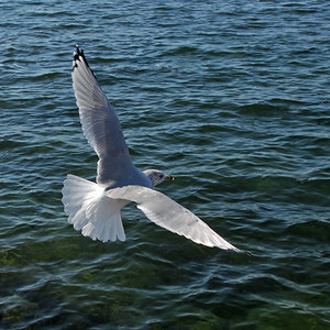 Remembering Jonathan Livingston Seagull. Photo © Alex Emes