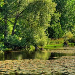 Saugeen River. Photo © Alex Emes