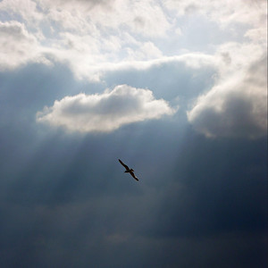 The Spirit Has Flown. Photo © Alex Emes