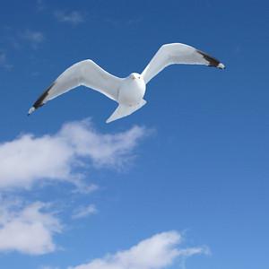 Remembering Jonathan Livingston Seagull. Photo © Alex Emes