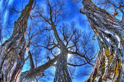 AE02b Trees - Canandaigua Lake, NY. Copyright © 2010 Alex Emes
