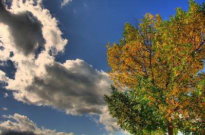 Canandaigua Tree. Photo © 2008 Alex Emes