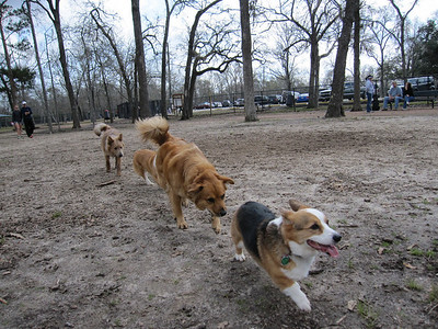 February 14, 2010 - Discovering The New Clear Lake Dog Park