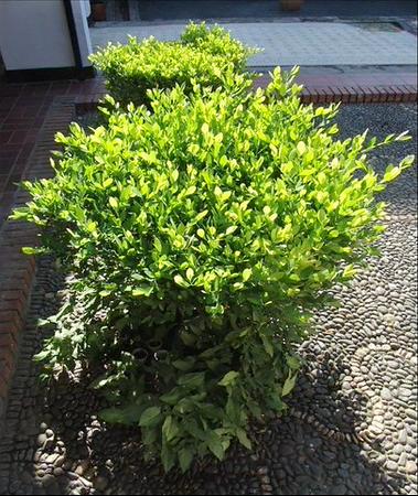 4. Wilson Díaz. Jardines de plantas coca en Cali, fotografía,  2003-2006.