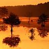 Cypress Dawn
