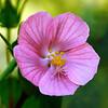 Wild Floweret