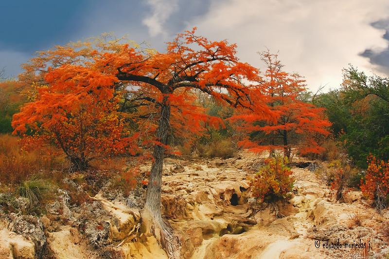 Dry Fall