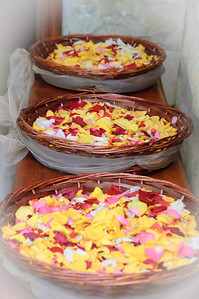 Petals for Confetti (3)