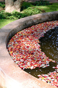Petalled Fountain (2)