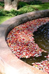 Petalled Fountain (2)