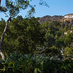 "Image of the Hollywood Sign from Beachwood Canyon. Hollywood sign with houses, hillsides, plants in the foreground and a very blue sky.<br /> <br /> Prints available at reduced prices! All proceeds to go The WE Empowerment Center, a 501 c 3 charitable trust<br /> <a href=""https://emmarosenthal.smugmug.com/Emmas-Store/LA-Paradise-Chimera/"">https://emmarosenthal.smugmug.com/Emmas-Store/LA-Paradise-Chimera/</a>"
