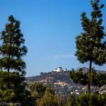 Barnsdall Art Park: The Observatory Through the Trees