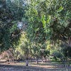 "Image of Olive Trees at Barnsdall Art Park and people resting on blankets. <br /> <br /> Barnsdall Art Center​<br /> Prints available at reduced prices! All proceeds to go The WE Empowerment Center, a 501 c 3 charitable trust<br /> <a href=""https://emmarosenthal.smugmug.com/Emma"">https://emmarosenthal.smugmug.com/Emma</a>…/LA-Paradise-Chimera/"