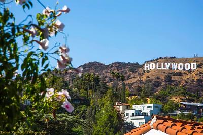 Photographs Of Los Angeles, November 2017